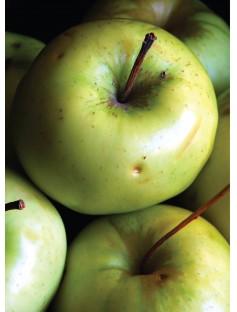 Apple Blossom Fragrance Oil