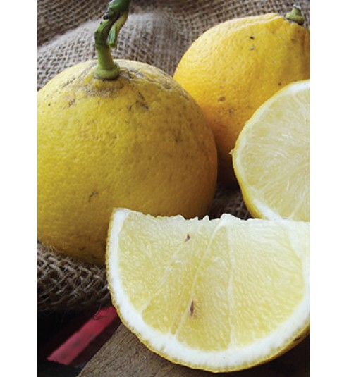 Bergamot Non-Phototoxic Organic Essential Oil