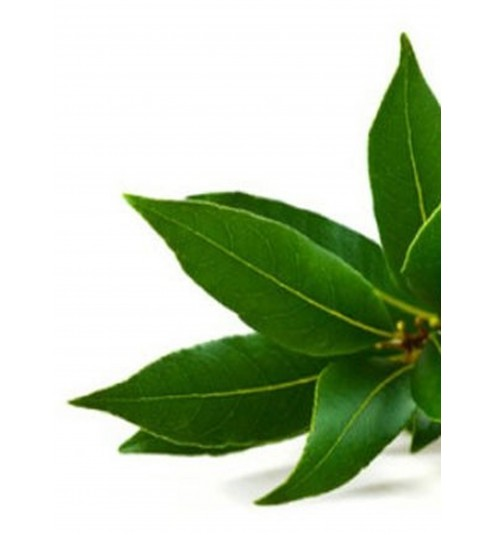 Ho Leaf