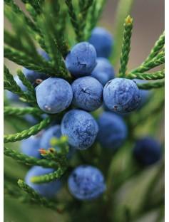 Juniper Berry Wild Tyrol Essential Oil