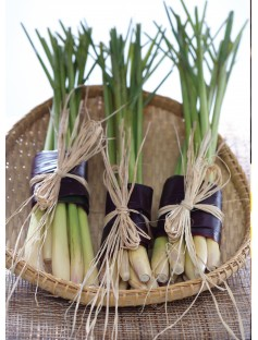Lemongrass Cochin Essential Oil