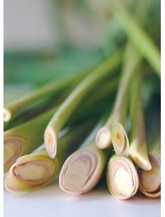 Lemongrass Guatemalan Essential Oil