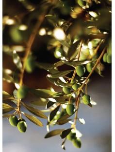 Olive Organic Virgin Oil