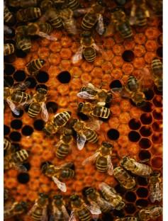 Beeswax Organic