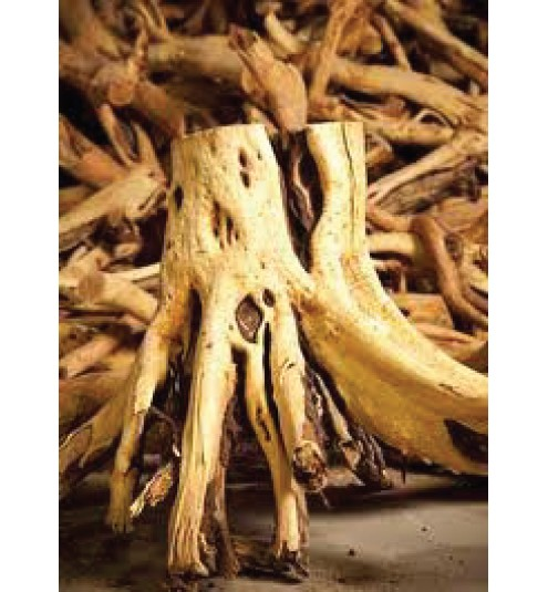 Sandalwood East Indian Essential Oil