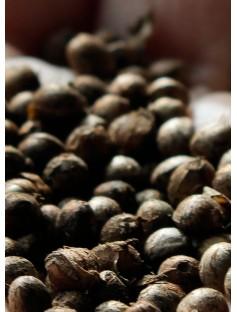 Hemp Seed Oil Organic