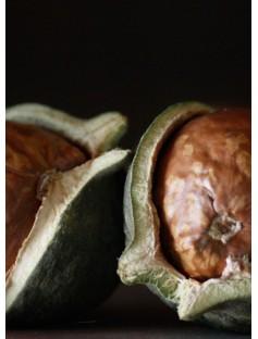 Macadamia Virgin Organic Oil