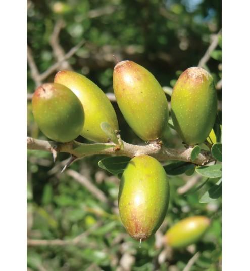 Argan Oil virgin organic deodorized
